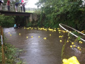 500 ducks dive from Trotton bridge for 30th annual duck race